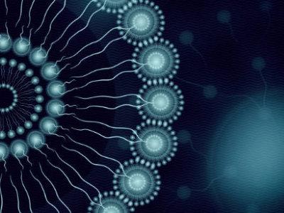 Structure d'un liposome présentant une double couche de lipide et un corps aqueux contenant la vitamine C.